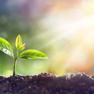 CBT Mindfulness Cork Online Course Young Plant Growing S